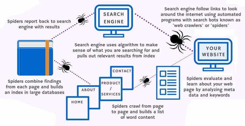 arañas de google rastreando web